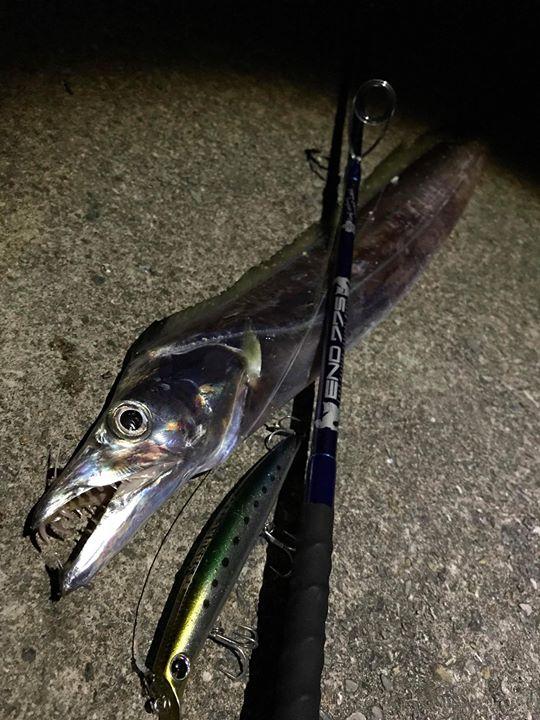 連日好調の宮平さん、仕事帰りにオニヒラアジ狙い…しかし留守だったそうですが、代わりに良型の太刀魚をキャッチ。