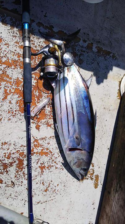 宮崎県、有名な遊漁船、インパクトの船長、江藤様からの釣果写真。